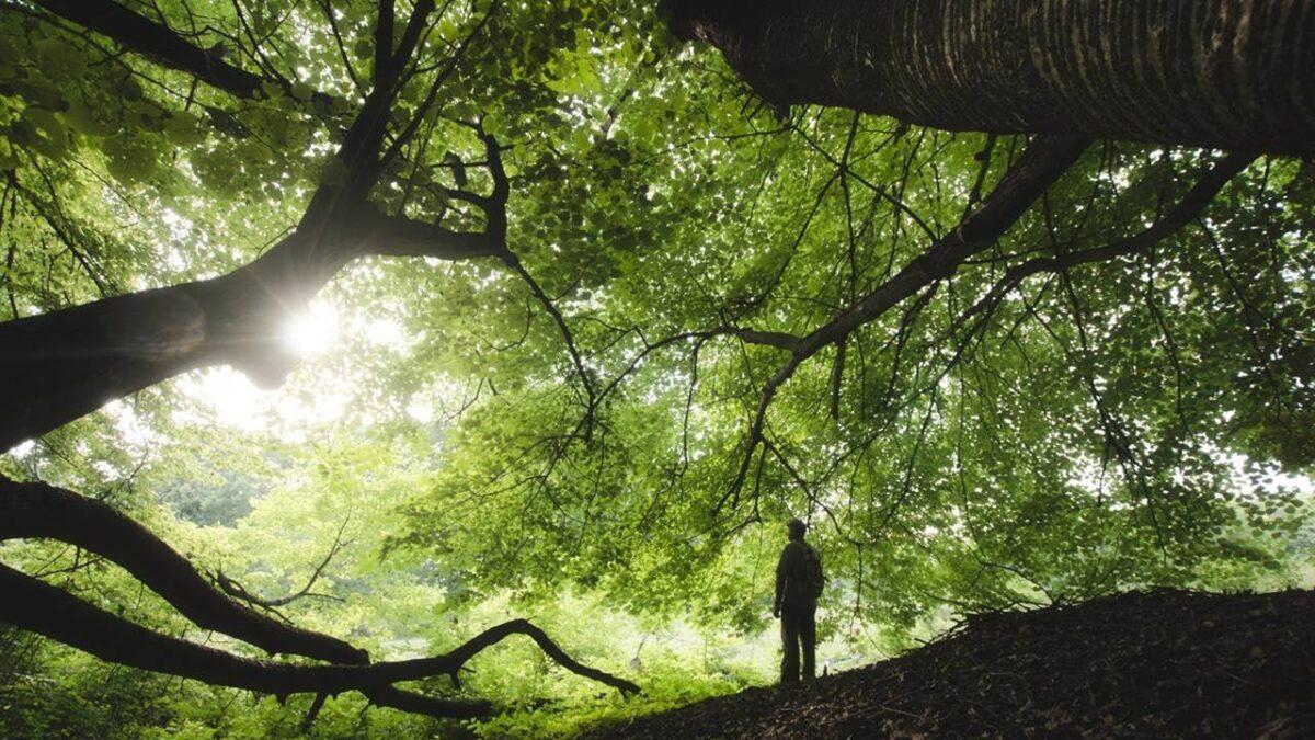 La naturaleza nos espera y nos renueva.